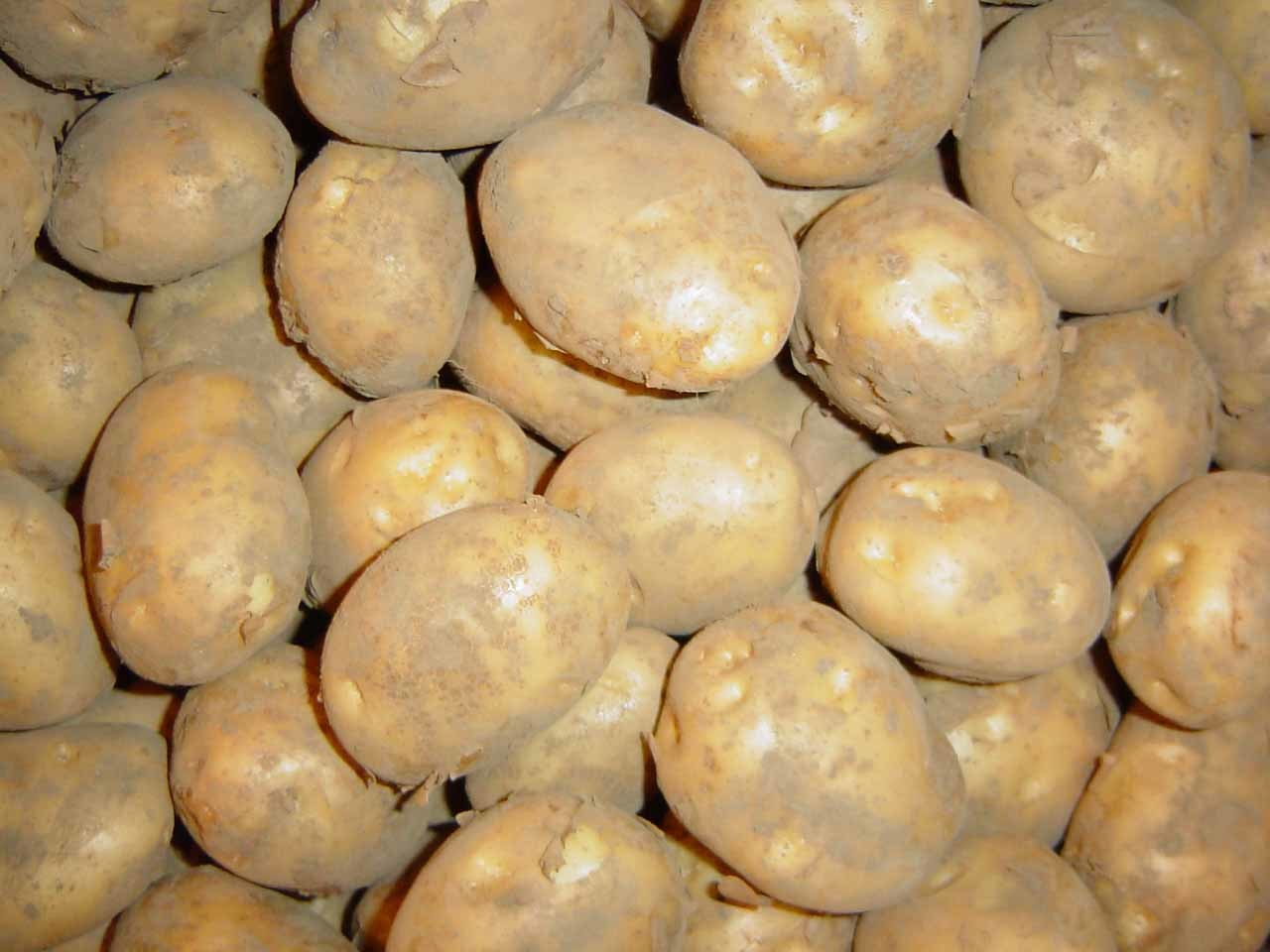 China Potato - ...