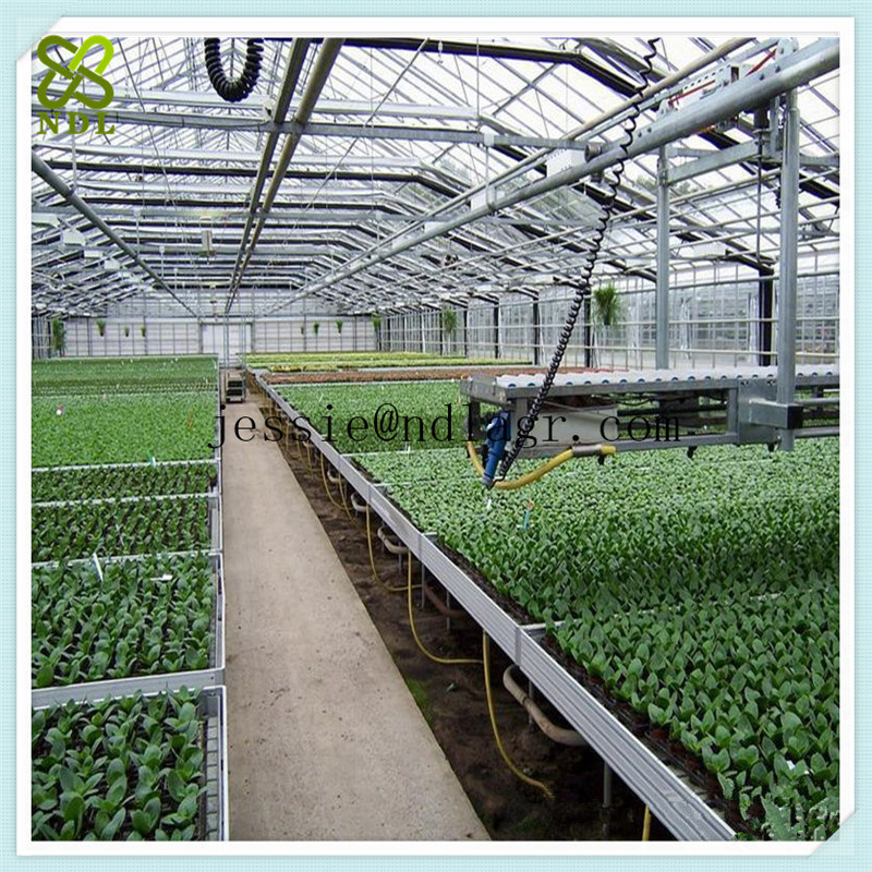 Flat Clear Tempered Glass Green House for Vegetable Growing