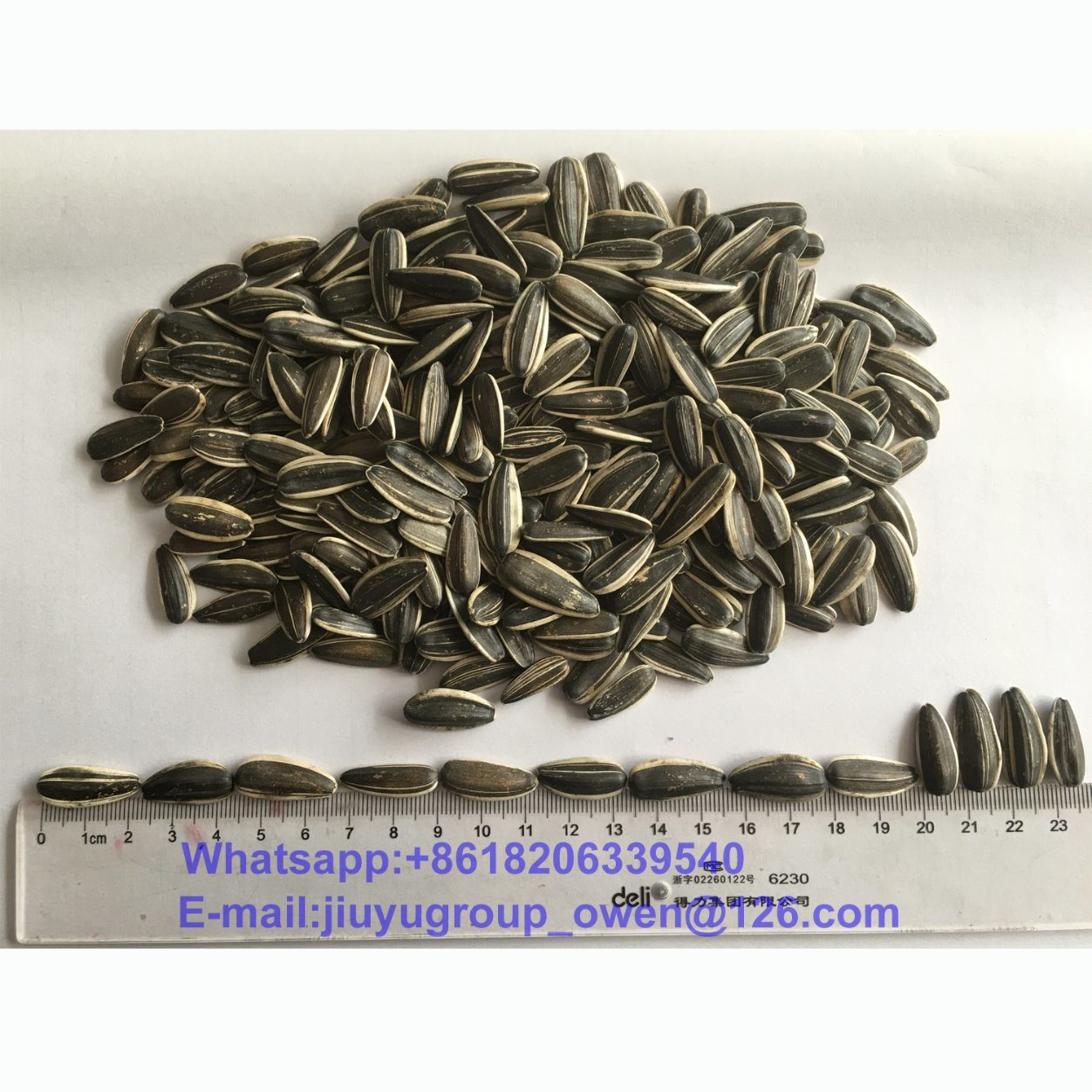 Food Grade Sunflower Seeds 5009