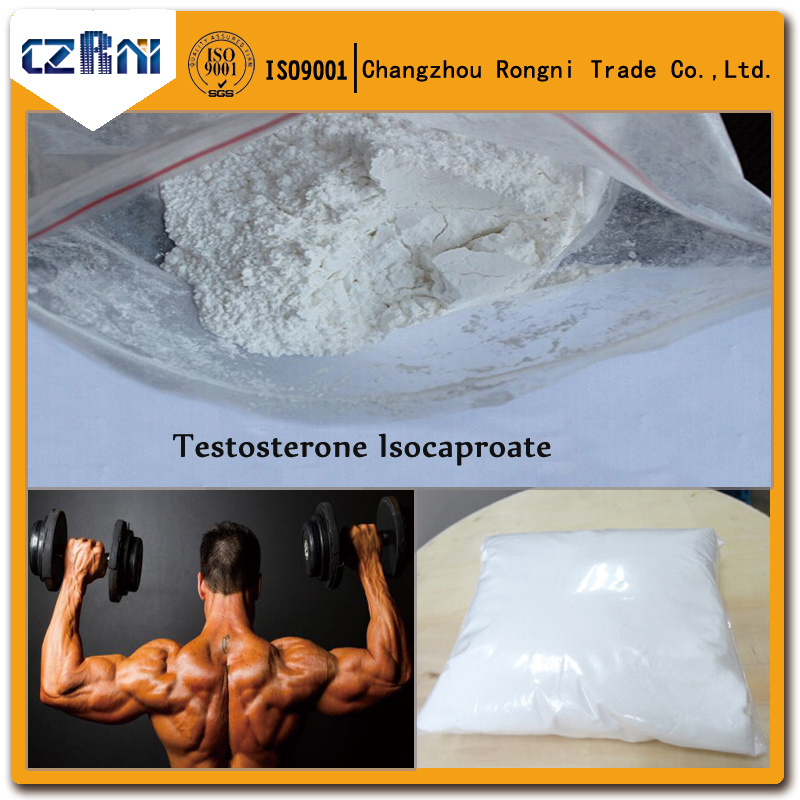 99% Purity Steroid Powder Testosterone Isocaproate for Pharmaceutical Intermediates