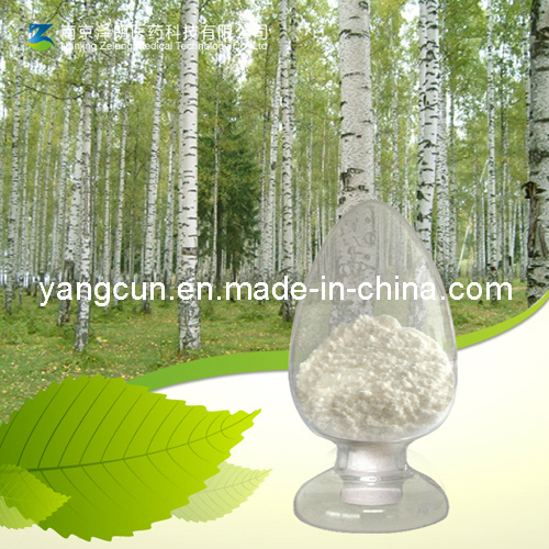 Birch Bark Betulinic Acid 98%