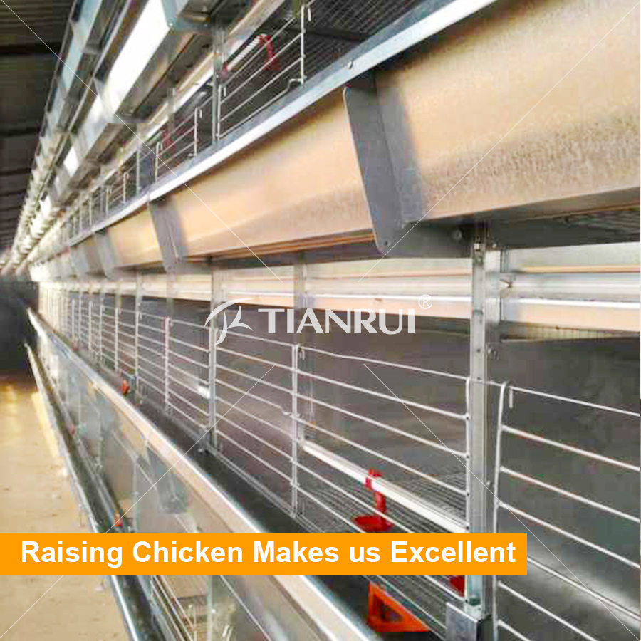 High Automatic H type poutlry battery cage for broiler in Nigeria / Africa