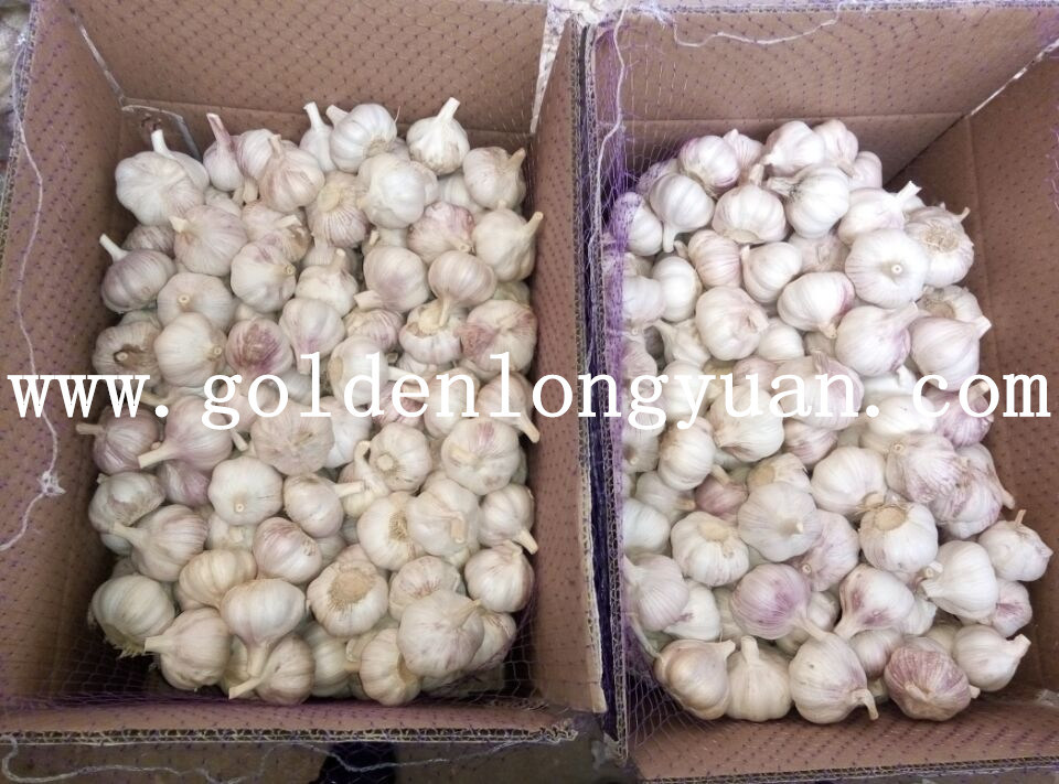 2016 New Season Fresh Red Garlic