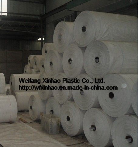 PP woven fabric circular polypropylene in tubular roll all kinds of vegetables