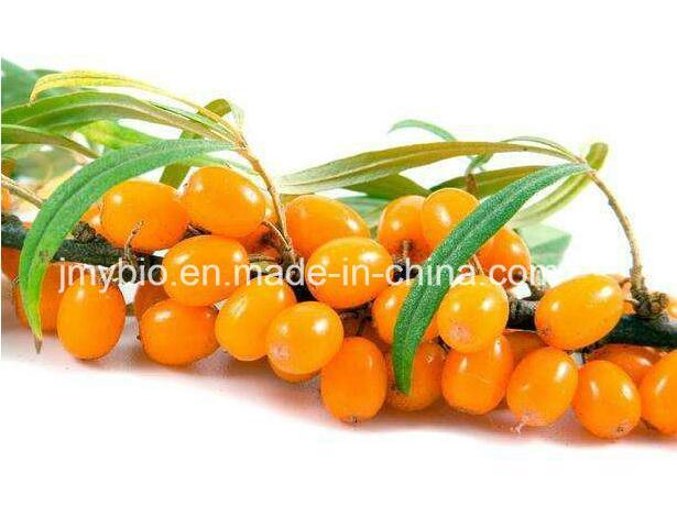 100% Natural Sea Buckthorn Seed Oil, Essential Oil
