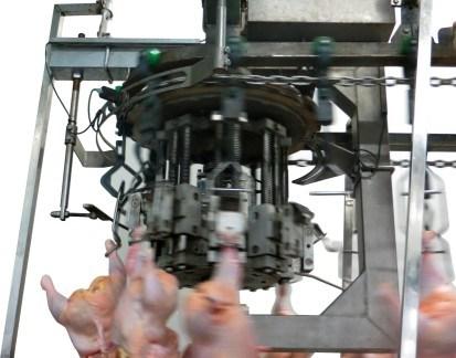Chain Type Weight Grading Machine