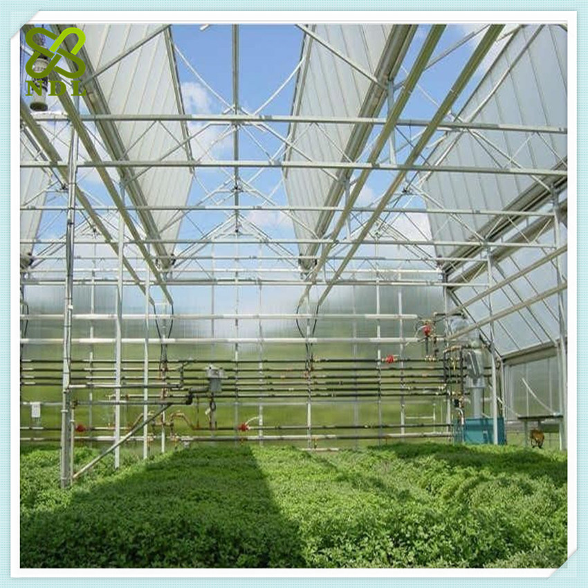 Multi Span Agricultural Polycarbonate Greenhouses for Vegetable