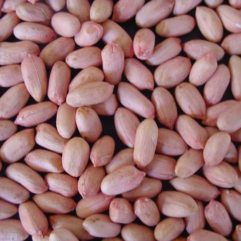 New Crop Shandong Peanut Kernel for Sale