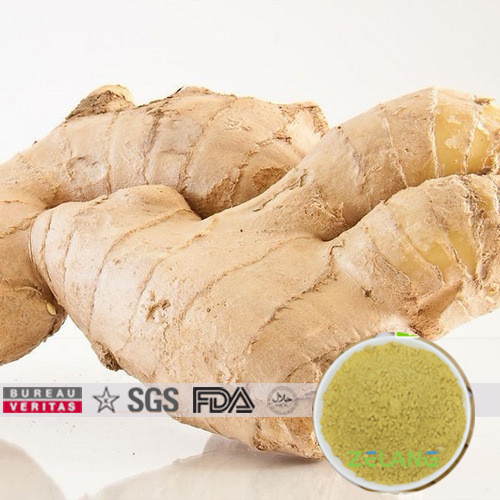 100% Cold Water Soluble Ginger Extract
