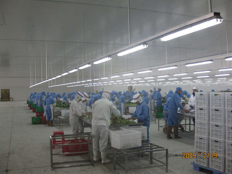 China fresh vegetable cold room and freezer krl4000sm m photos