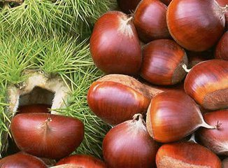 New Crop Good Quality professional Chestnut