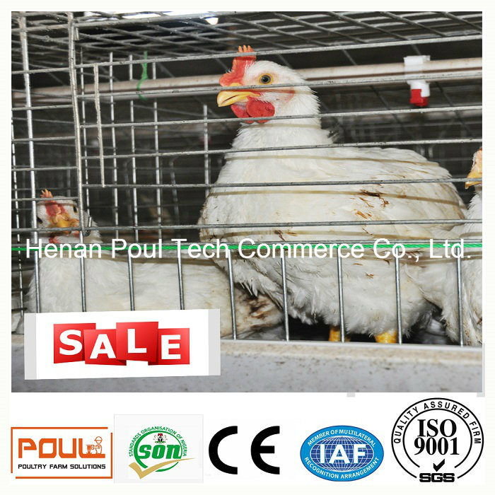 Automatic Broiler Chicken Cage (A frame)