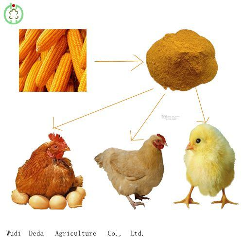 60% Yellow Corn Gluten Meal Protein Powder Chicken Food