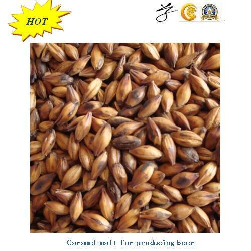 Barley Malt for Producing Beer