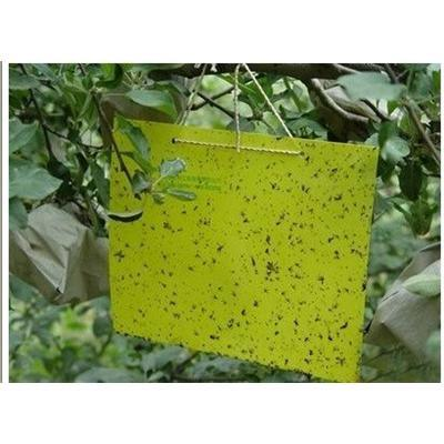 Thrips Whitefly Glue Paper, Thrips Whitefly Glue Traps, Stick Insect Yellow Blue Board/Sticky Paper (AM-TP01)