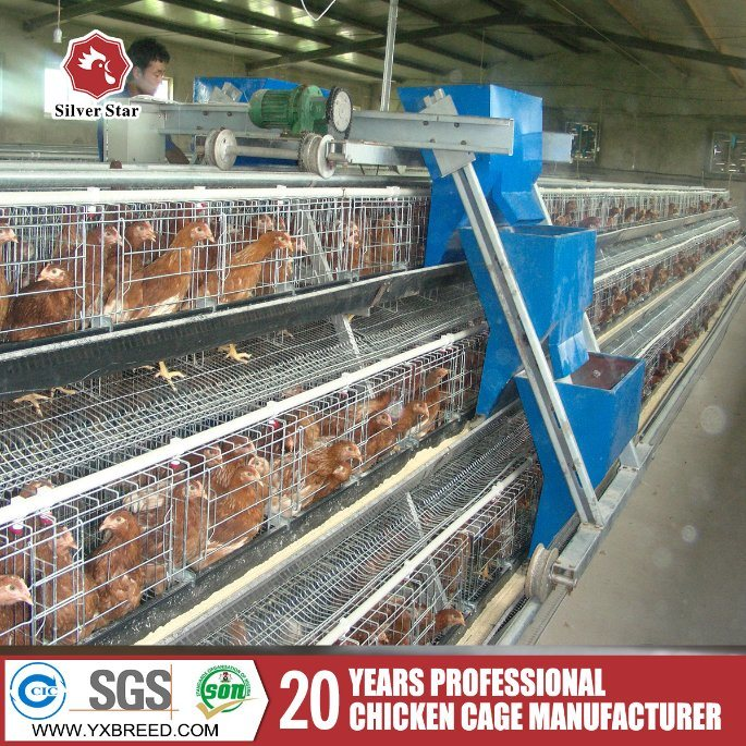 Hot High Quality Automatic Poultry Bird Cages for Broiler Chicken