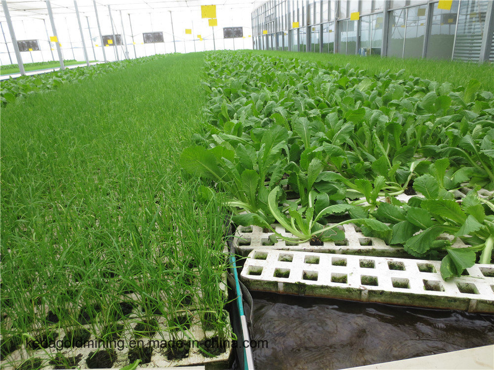 Hot Sale Hydroponic Growing System for Vegetable