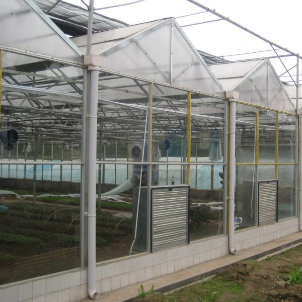 China Commercial Intelligent Multispan Glass Greenhouse
