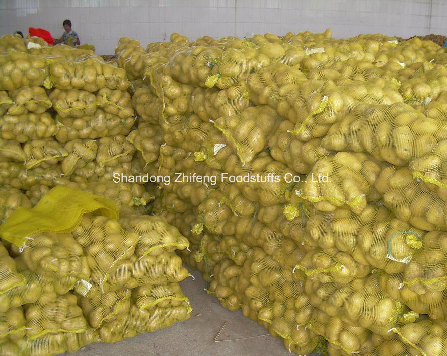 Chinese New Exporting Fresh Potato