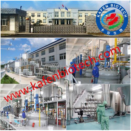 GMP Approval Best Manufaturer Supply L-Carnitine Powder 541-15-1