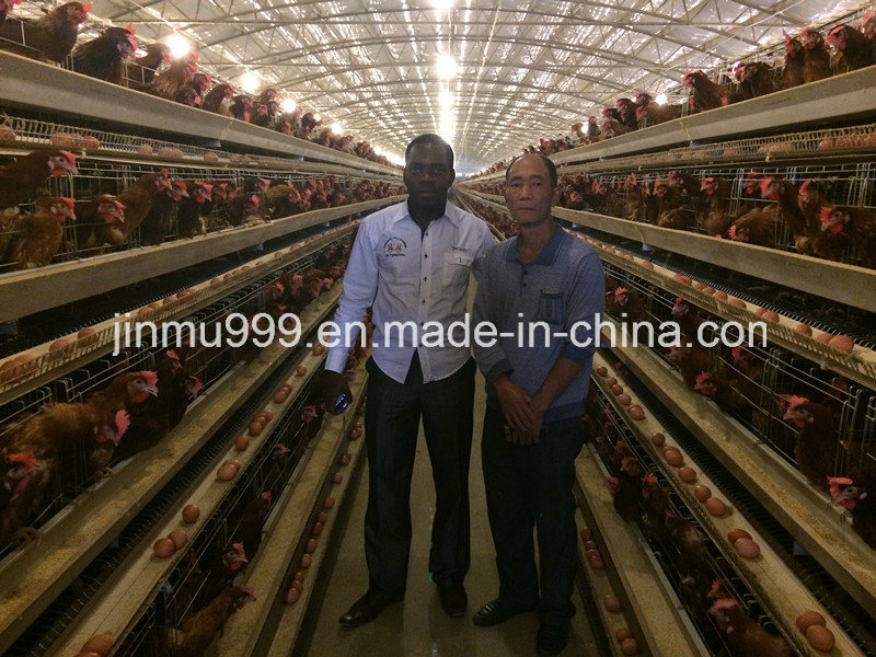 Automatic Battery Layer Chicken Poultry Cages Used in Nigeria