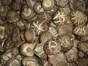 New Crop High Quality Fungus From Different Edible Mushrooms
