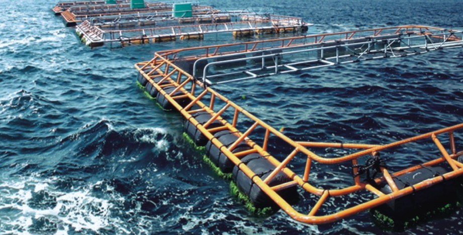 The Full-Metal Anti-Wave Deep Sea Fish-Cages