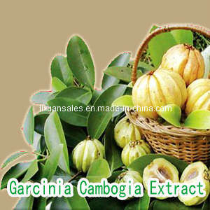 Cambogia Fruit Extract Powde - China Garcinia Cambogia Fruit Extract