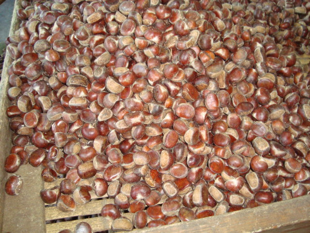 2016 professional Exporting New 50-60 Organic Fresh Chestnut