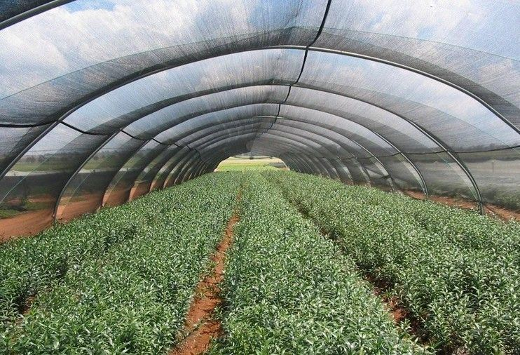 Sun Shade Netting for Agriculture