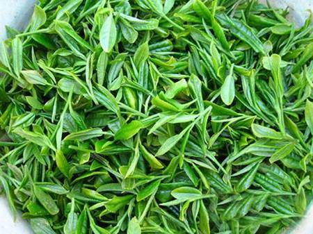 Green Tea Extract Theanine for Food Supplement