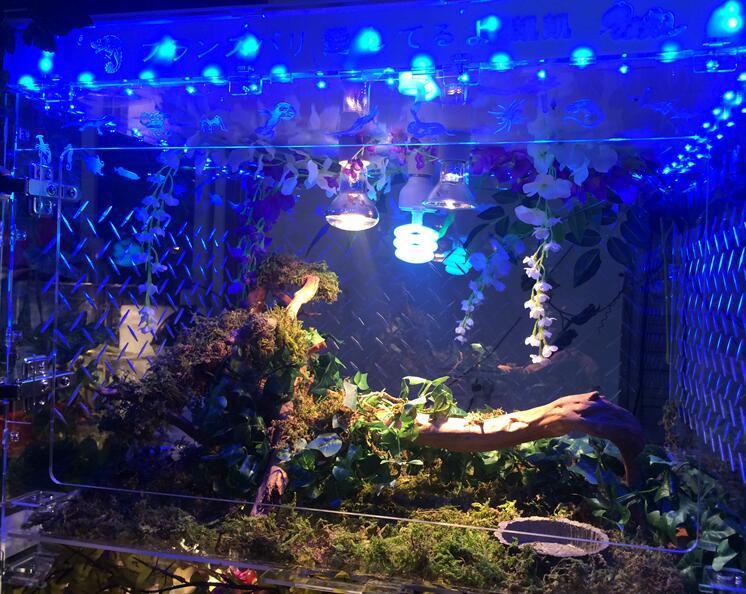 Customized Design Acrylic Box LED Display Reptile Box