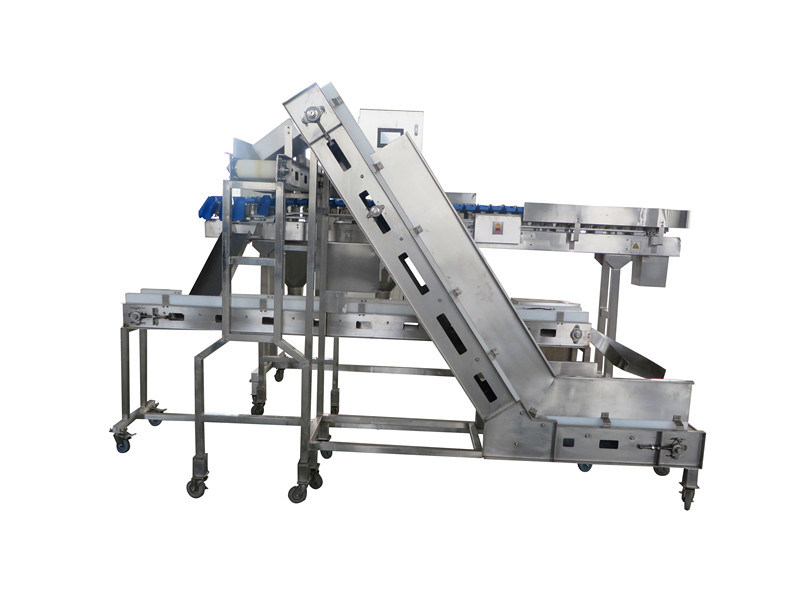 5-12 Grades Belt Weigher for Chicken Oyster Machine