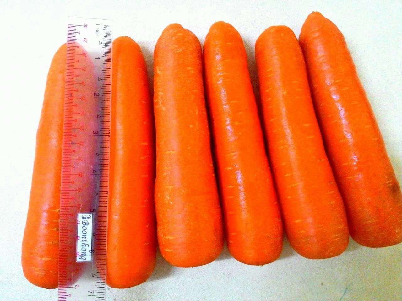 2017 Export Vegetable Good Quality Fresh Carrot