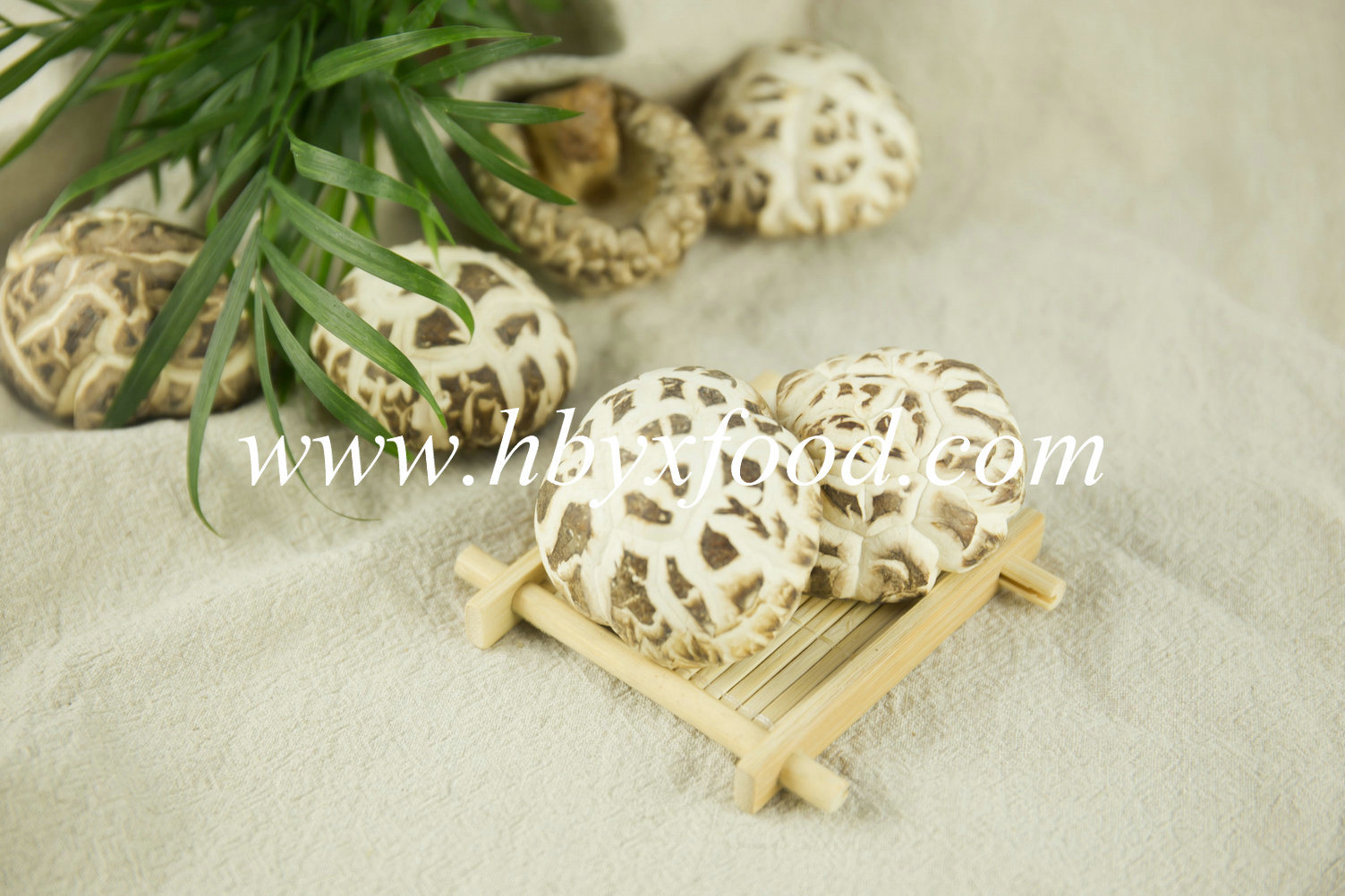 Dehydrated Flower Mushroom, China Shiitake Mushroom