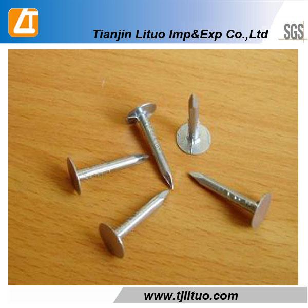 Galvanized Big Head Clout Hardboard Nails