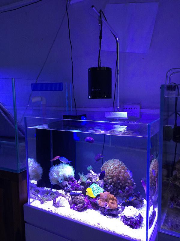 New Model Patented Coral Reef LED Aquarium Fish Tank Light