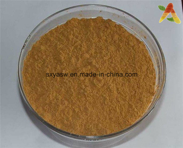 Natural Beneficial for Women 1% Angelica Plant Extract