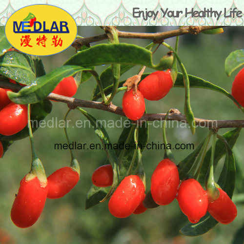 Ningxia Organic Dried Red Goji Berry (Wolfberry) --220 Grains