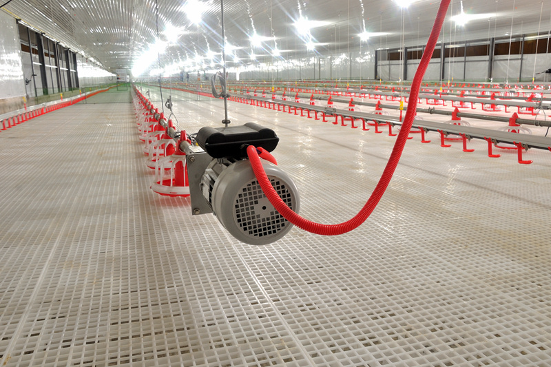 Automatic Chicken Feeding and Raising Equipment in House