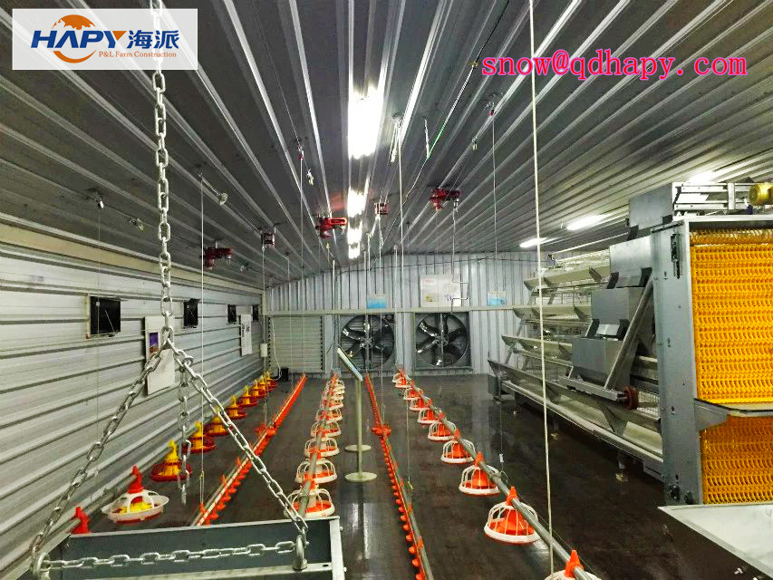 Poultry House Construction with Professional Equipment From China Manufacturer
