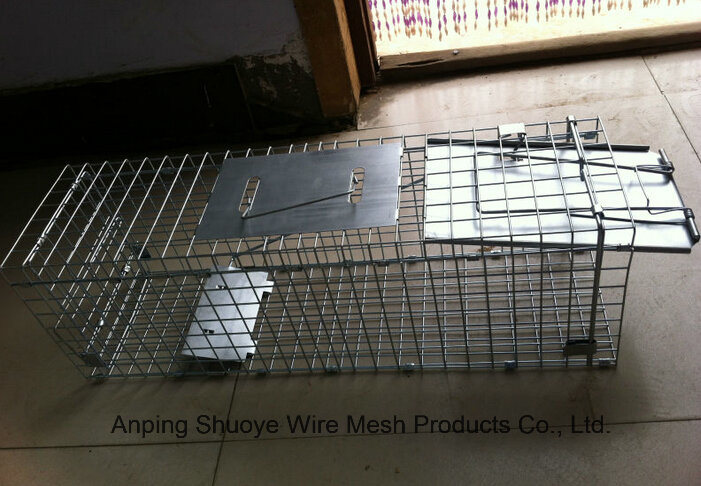 Galvanized Steel Wire Mesh Live Animal Trap for Squirrel
