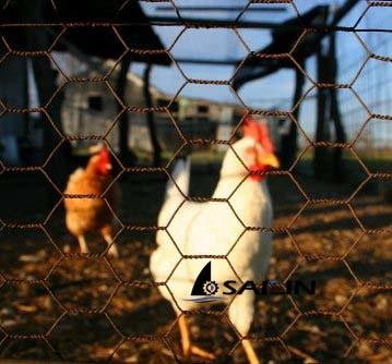 Sailin Hexagonal Wire Mesh for Chicken Rabbit