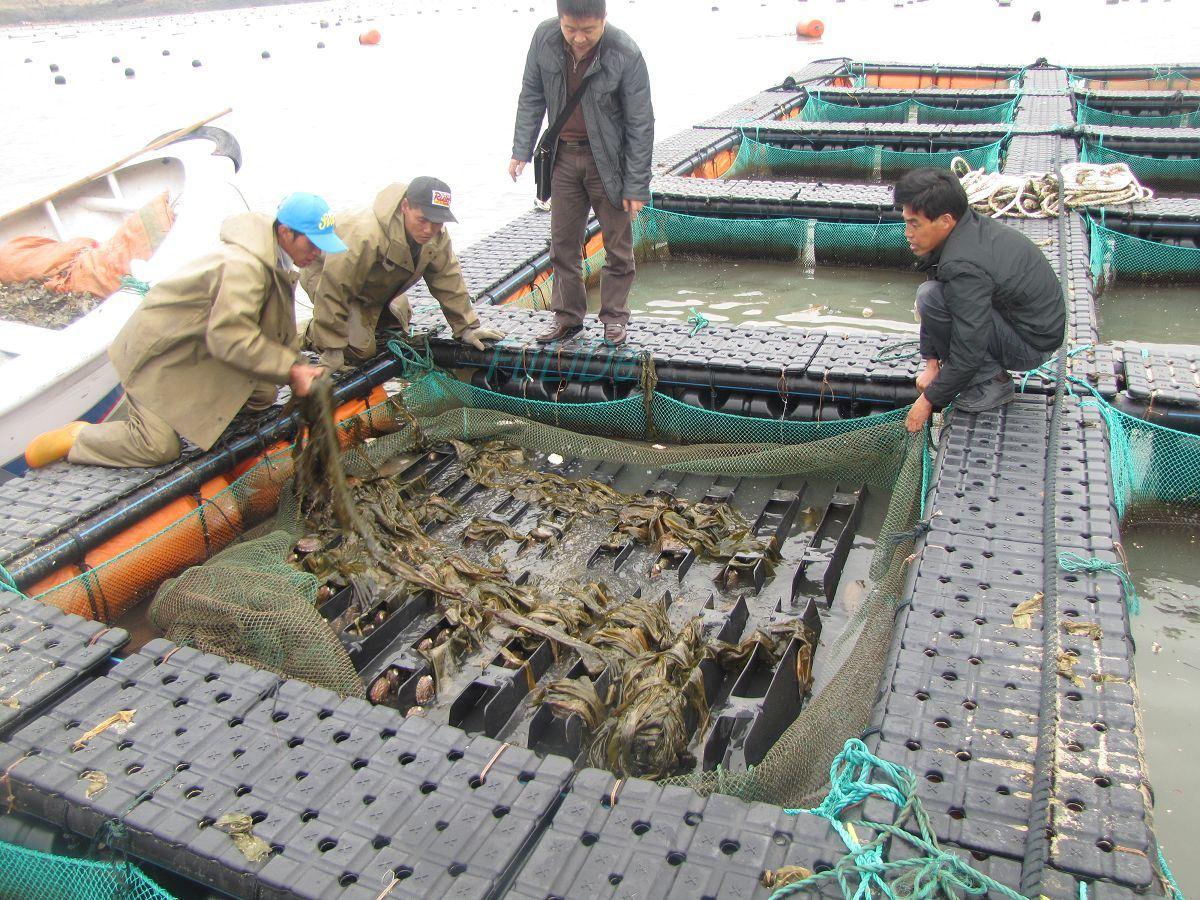 HDPE Deep Sea Culture Tilapia Cage