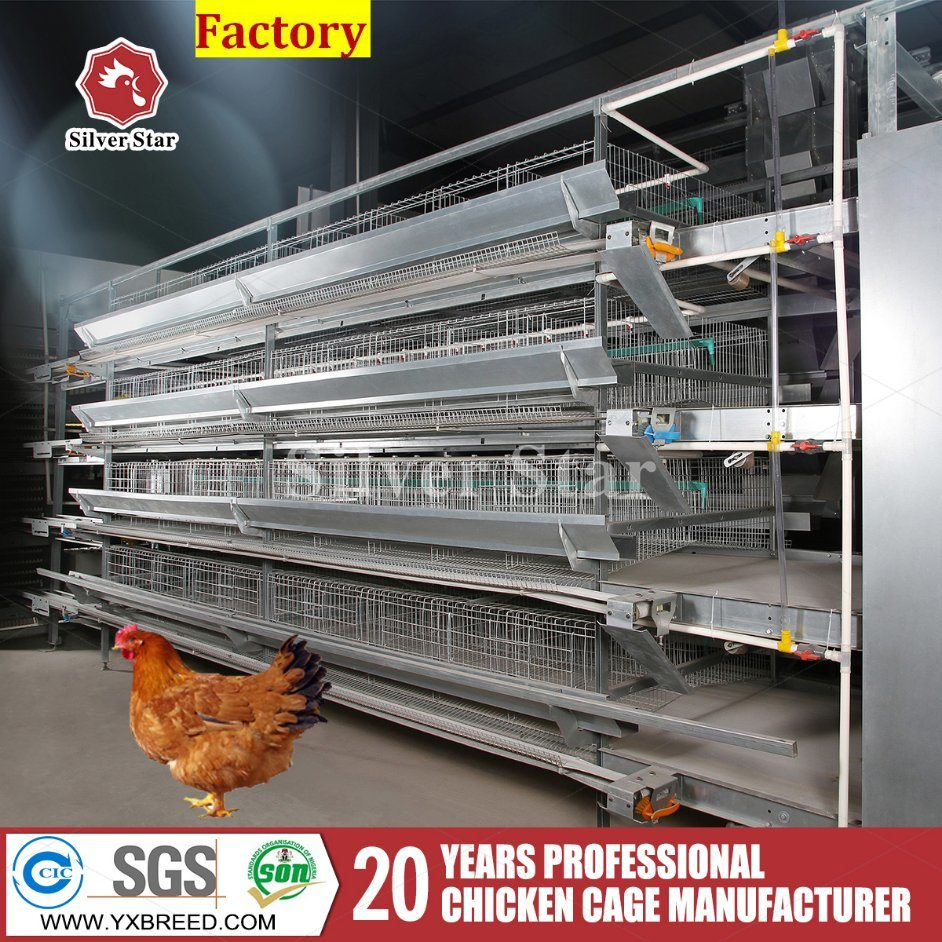 Poultry Farming Equipment H Type Layer Chicken Cage with Poultry Feeder