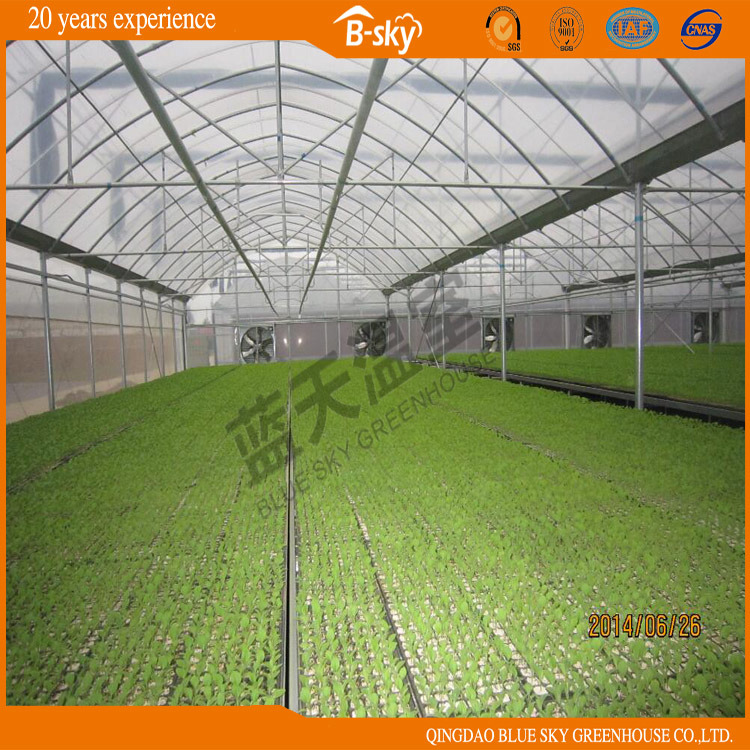 Hot Sale Low Cost Plastic Film Greenhouse