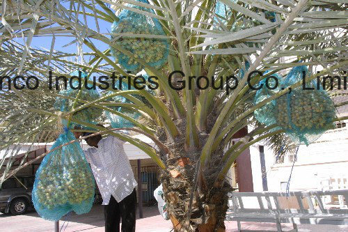 80X100cm, 70X90cm Green Mono Filament HDPE Date Palm Mesh Net Bag for Date Cover
