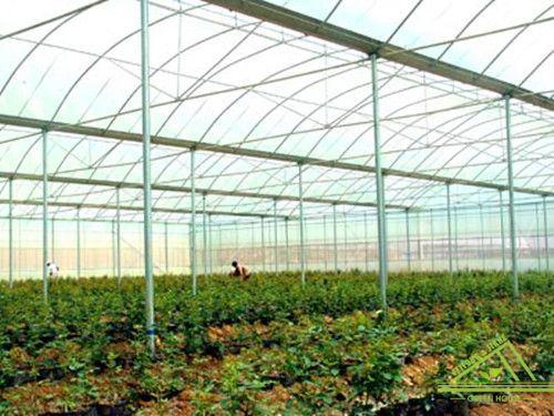 Zigzag Roof Film Greenhouse