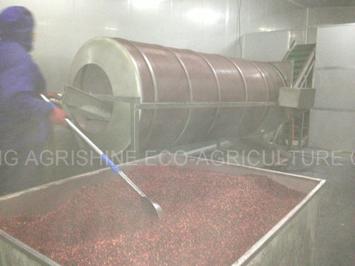 IQF Lingonberry or Frozen Lingonberry
