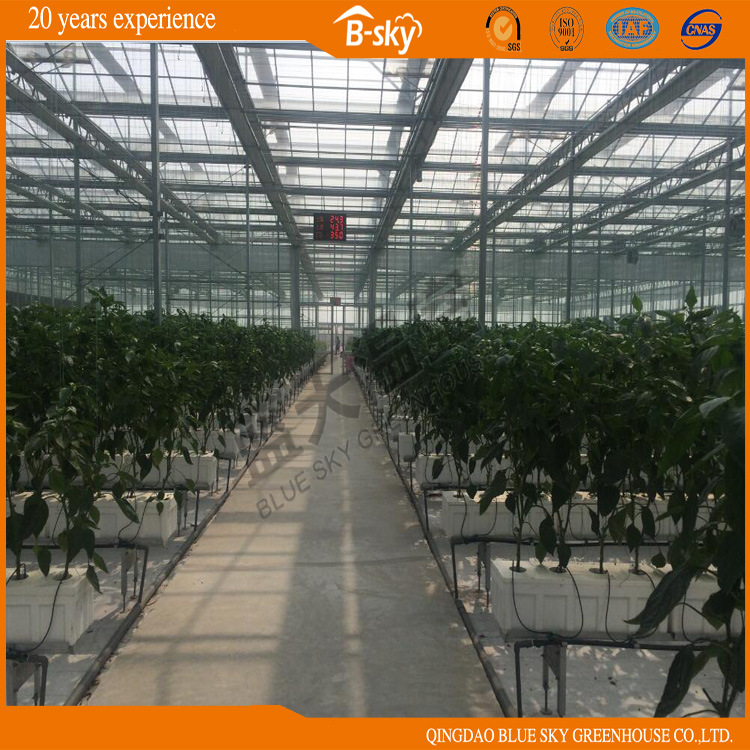 Glass Multi-Span Greenhouse Venlo Structure